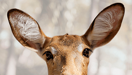 hh-animals-deer-4